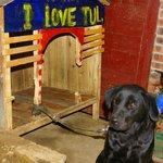 hostel's dog