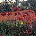 View of Garden poinsettias from Studio Room