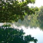 Vista hacia el Cenote