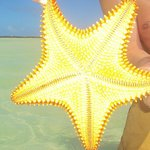 starfish were fun to find...and put back