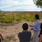 The fabulous vineyard