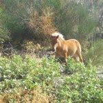 Uno dei cavalli dell'agriturismo
