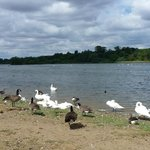 Some of the wild life at the Mere.