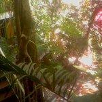 vista desde el segundo nivel hacia el jardín.