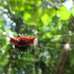 Weird spider seen on a trek