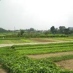 the amazing gardens.