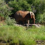 Elephant right next to our room, across the river