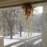 Bird poop on the inside of windows from where birds sit on outside ledge.