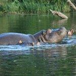 Tydon Safari encounter