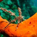 Neck Crab