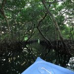The mangrove trip is worth taking