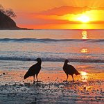 Buzzards on the beach