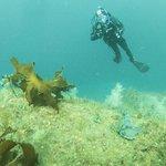 Descend Scuba Diving - Milford Sound