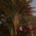 vegetazione messicana