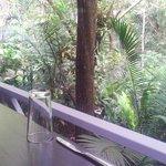 Amazing jungle view