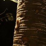 蛙が木登り!
