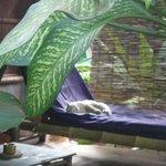 the outside bed of one of the huts