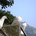 Yaoxi birds