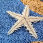 found several starfishes in the sea:P
