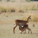 La vita a Murchison Falls