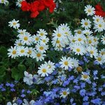 Helen's gorgeous flowers