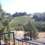 View of a vineyard from the front steps
