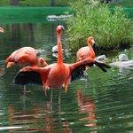 The flamingo pond