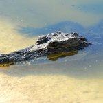 The alligator pond