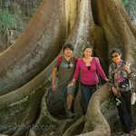Allerton Gardens: Moreton Bay Fig with Tourists