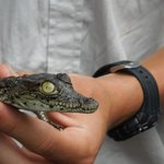 A baby croc... Kids loved touching it!