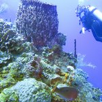 Scuba Diving in West Bay Beach