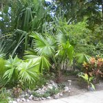 Lush vegetation, beautiful landscaping and care