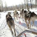 Traîneaux à chiens sur notre site