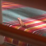 view from the kitchen.....gecko