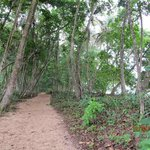 Sand trail in Cahuita Park