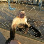 Poor little monkey all alone in a cage