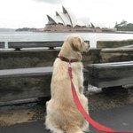 Pet Friendly - close to Opera House