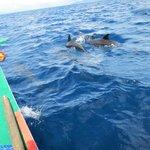 Dolphins in Sogod Bay
