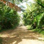 On a bike ride close to Surinat