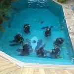 scuba school