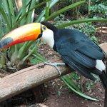 the colourful birds in the Bird park
