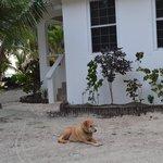Mara the resort dog who claimed us as family