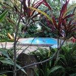 A piscina é pequena, mas super limpa. Ao redor, um jardim agradável