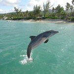 The dolphins did tricks and jumps during our 'dolphin encounter!' This is at Dolphin Lagoon