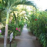 Love the pathway in Hidden Paradise