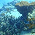 Bari Reef. Underwater photo.