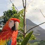 The parrot who lives in the gardens