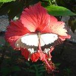 Zanzibar Butterfly Centre