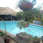 Bahona tropical Foto