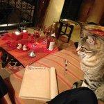 ワインと猫ちゃん♡